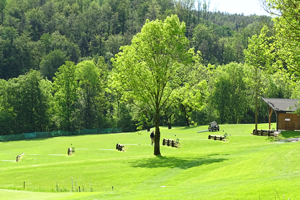 practise area at golf club Thalersee